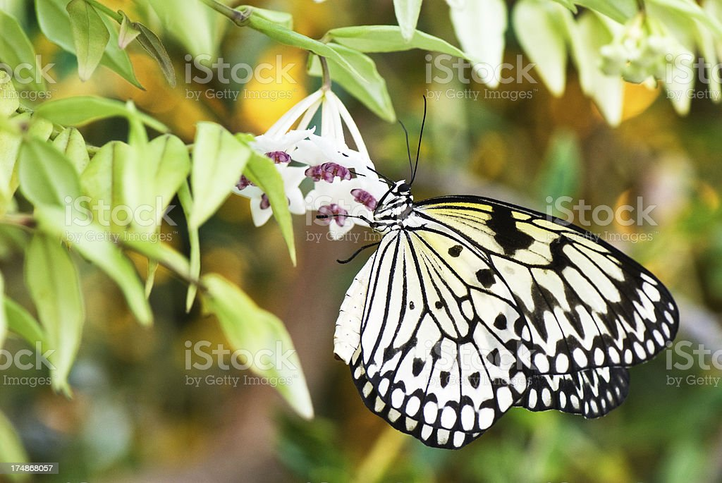 Paper Kite butterfly royalty-free stock photo