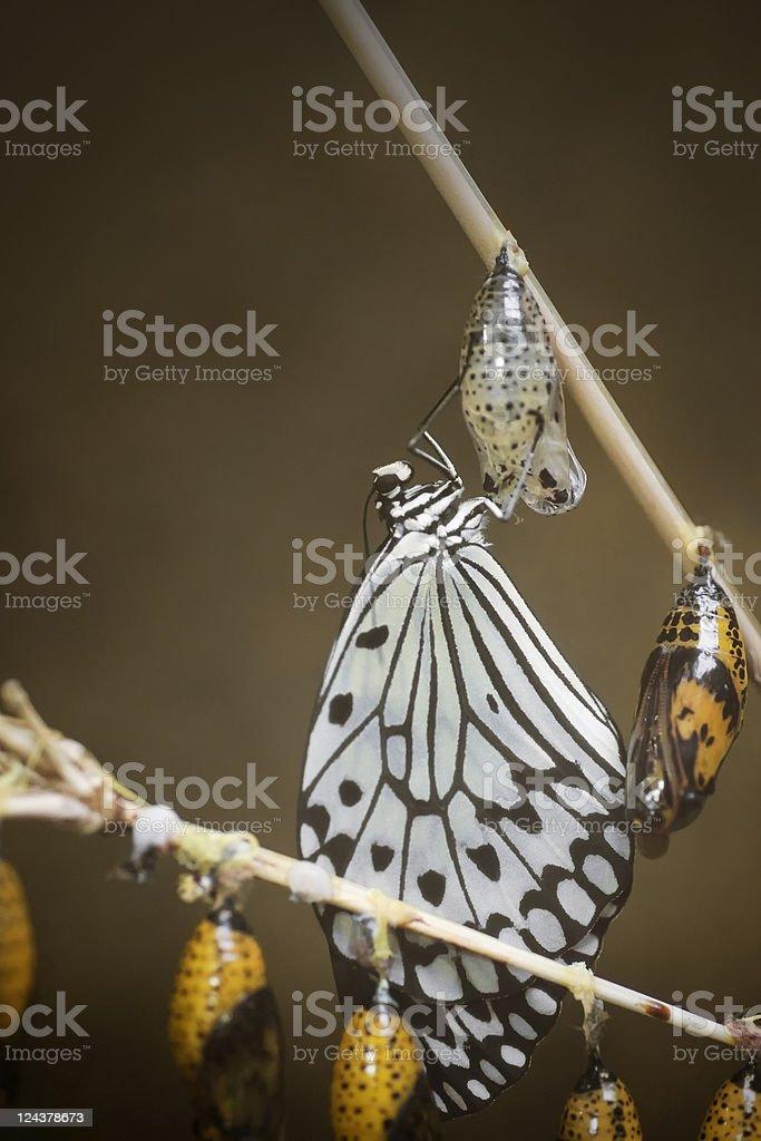 Paper kite hatching stock photo