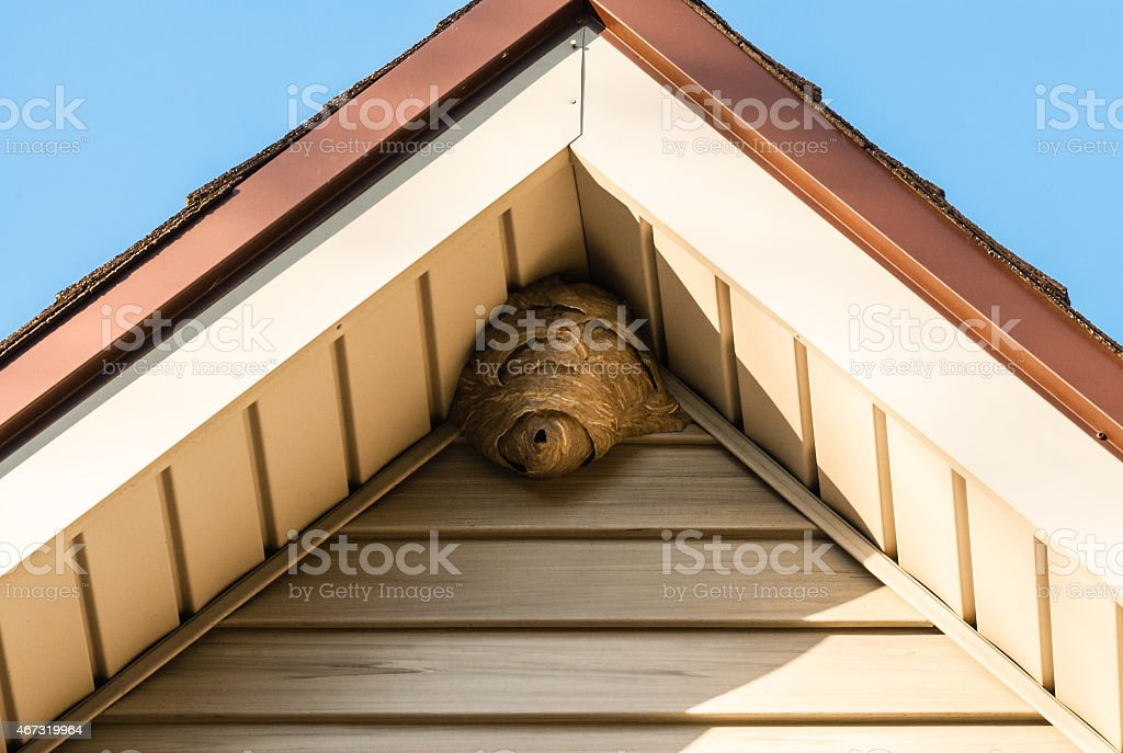 Paper wasp nest on triangular roof siding stock photo