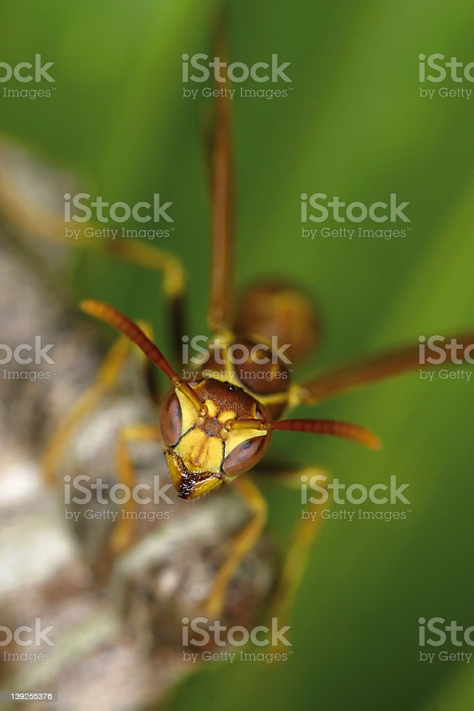 Paper Wasp royalty-free stock photo