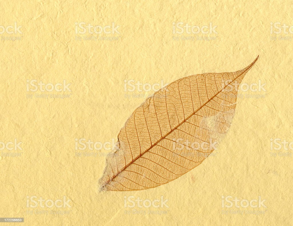 XL Paper with Leaf royalty-free stock photo