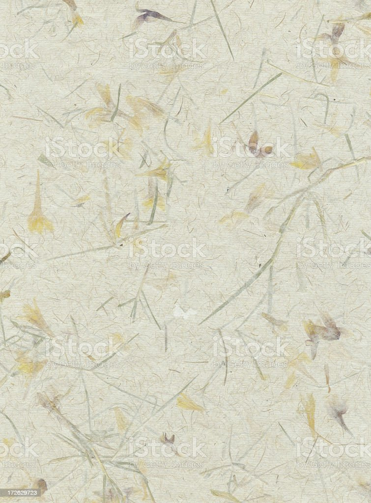 Papers of Distinction: Flower Petals stock photo