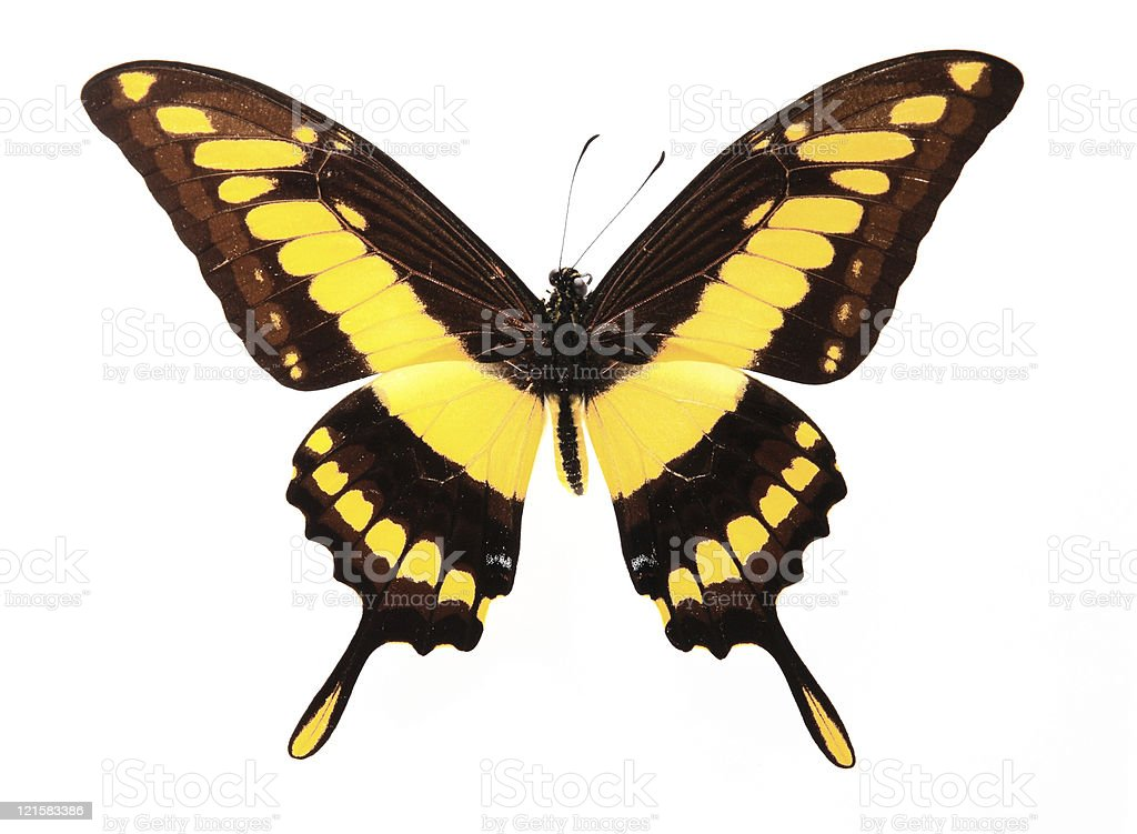 butterfly on yellow color - photo #41