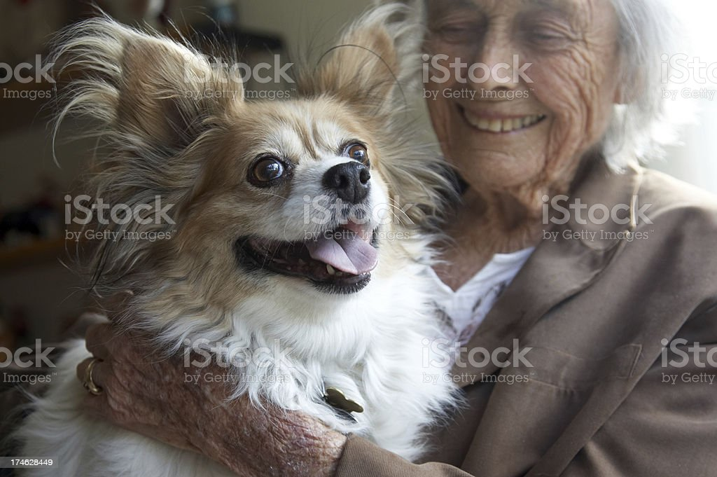 Papillon dog with owner royalty-free stock photo