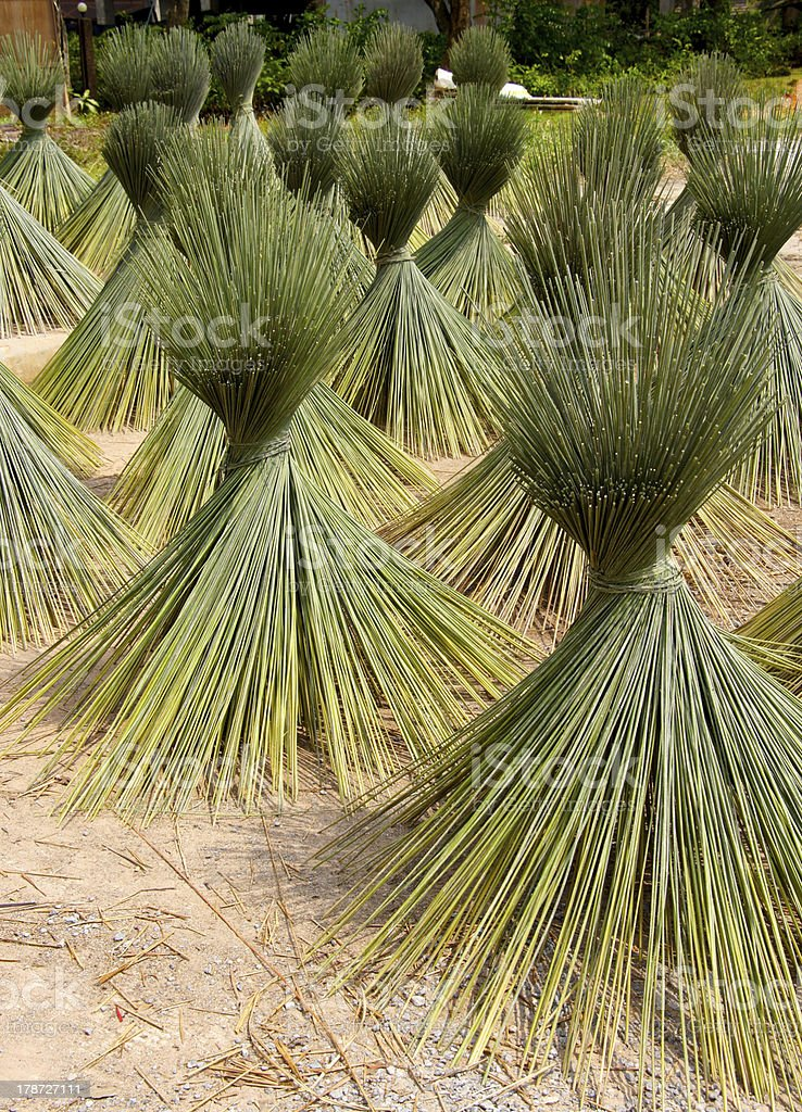 Papyrus for basketry hand, made product Thailand. royalty-free stock photo