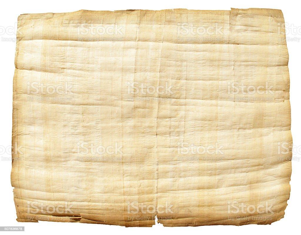 Papyrus stock photo