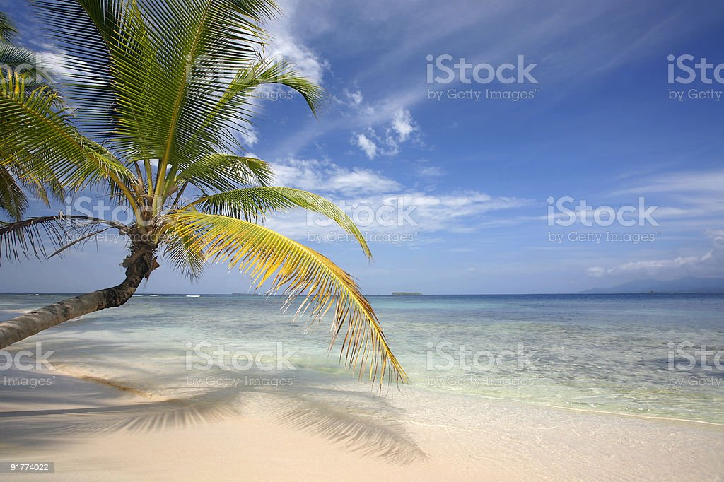 Paradise Beach with Coconut Palm royalty-free stock photo