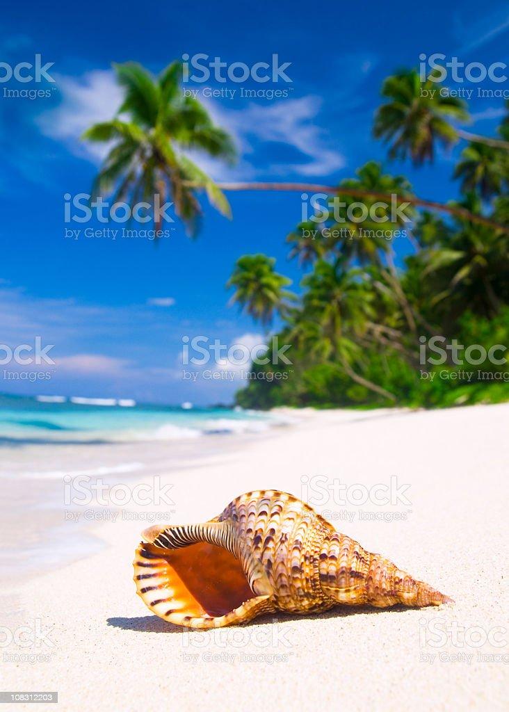 Paradise Beach with Shell royalty-free stock photo