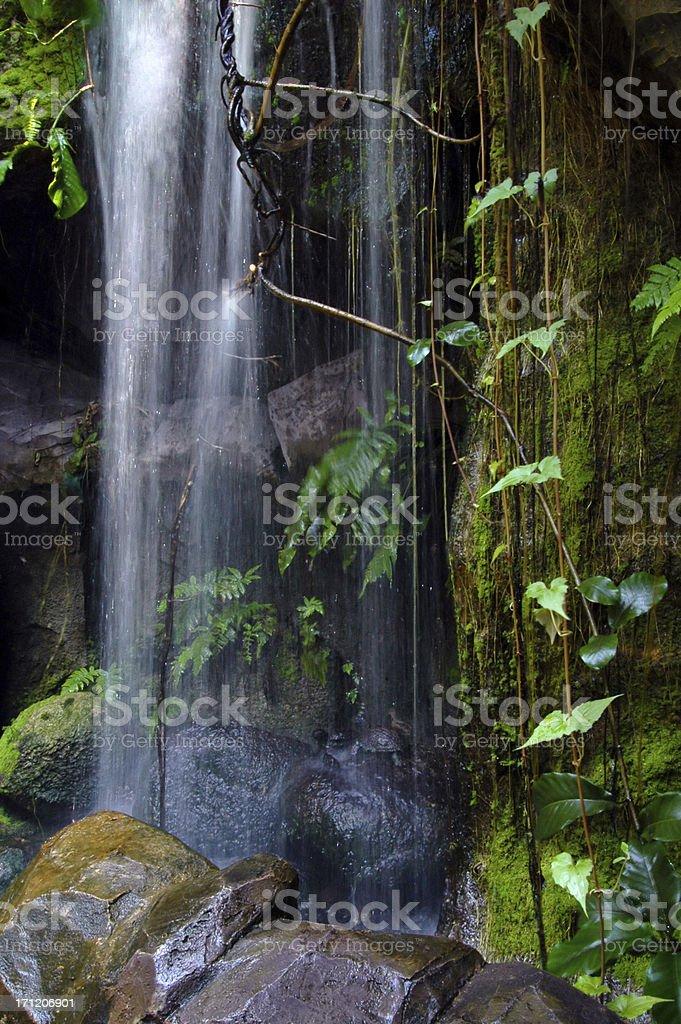Paradise Oasis royalty-free stock photo