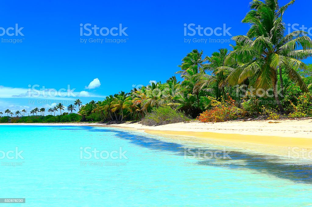 Paradise on Earth: Sunny Idyllic Sandy beach, green Palm trees stock photo