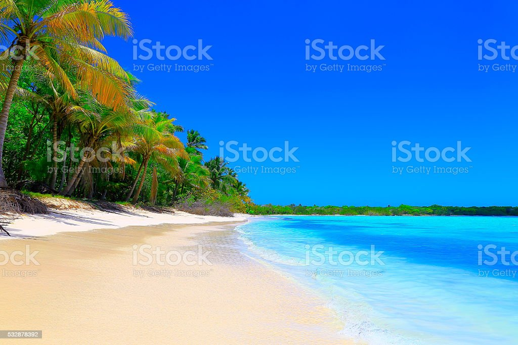 Paradise on Earth: Sunny Idyllic Sandy beach, green Palm trees stock photo