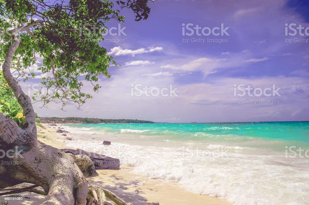 Paradise Playa Blanca beach of Baru island by Cartagena in Colombia stock photo