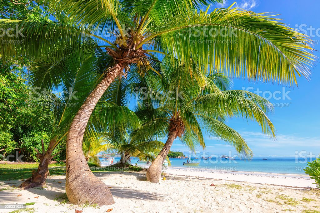 Paradise tropical beach at Praslin island, Seychelles. stock photo
