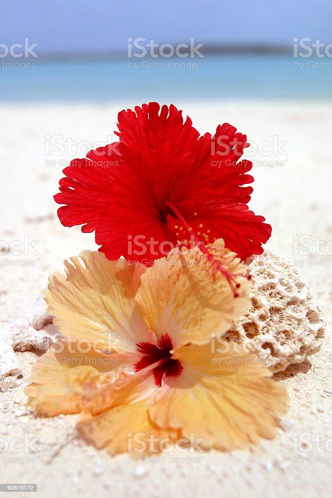 Paradise_Flower royalty-free stock photo