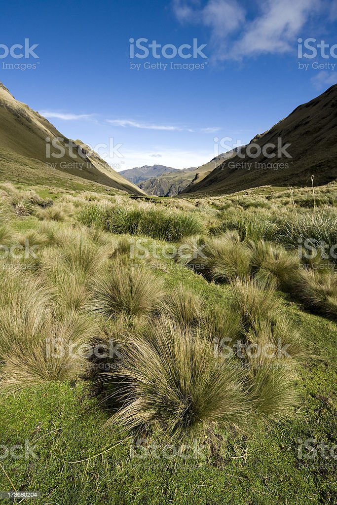 Paramo landscape in Ecuador stock photo