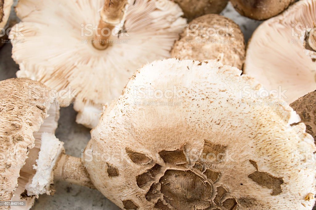 Parasol mushroom on a wooden table stock photo