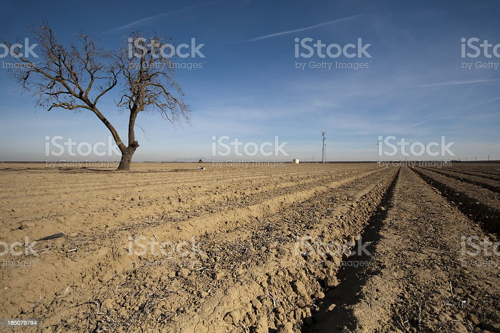 Parched Agricultural Land stock photo