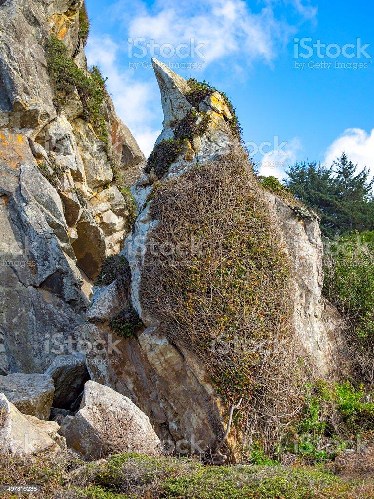 Pareidolia Rock Looks Like Bird Harris Beach State Park Oregon stock photo