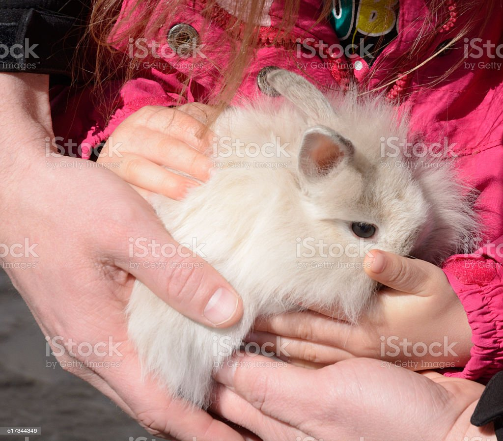 Parent helping child hold baby lionhead rabbit stock photo