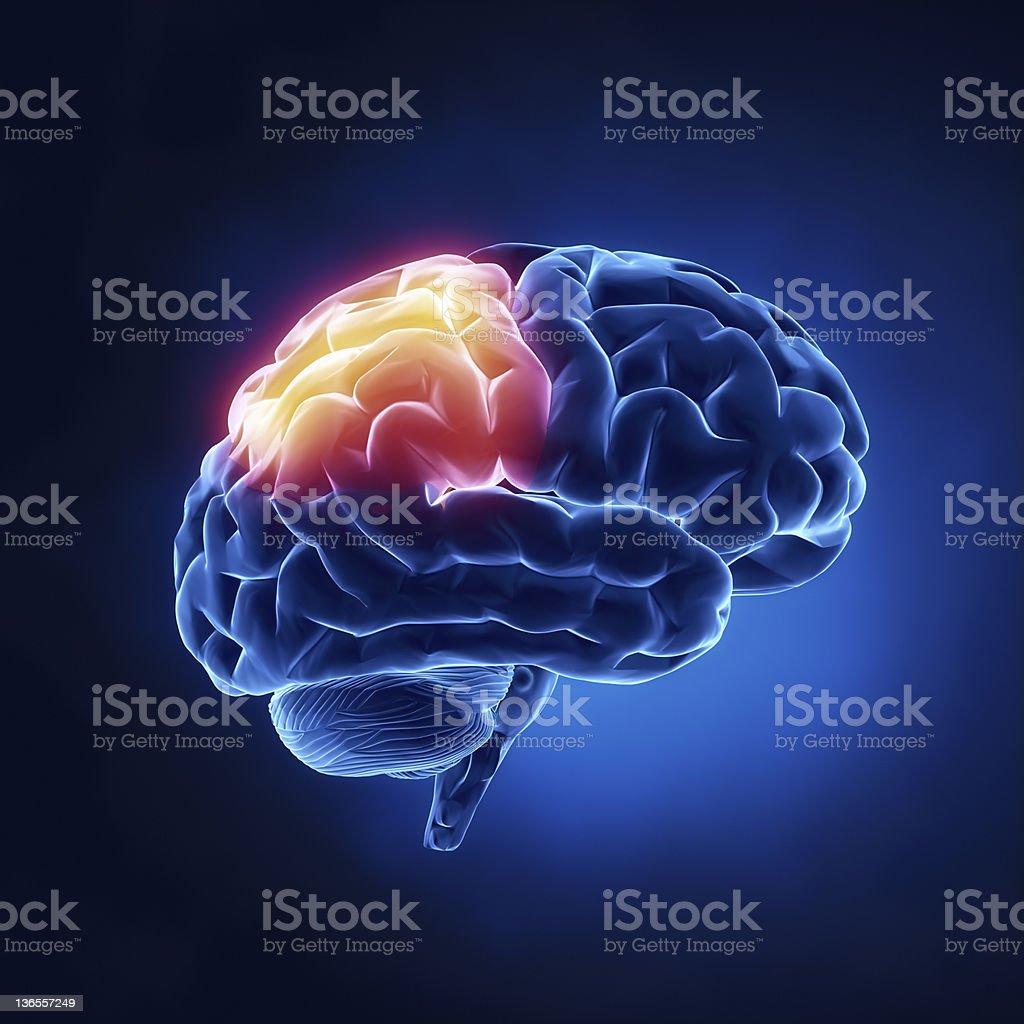 Parietal lobe - Human brain in x-ray view stock photo