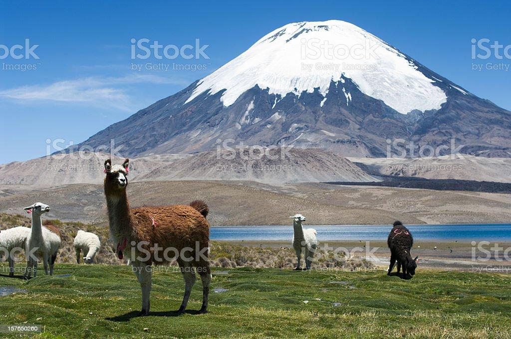 Parinacota volcano stock photo