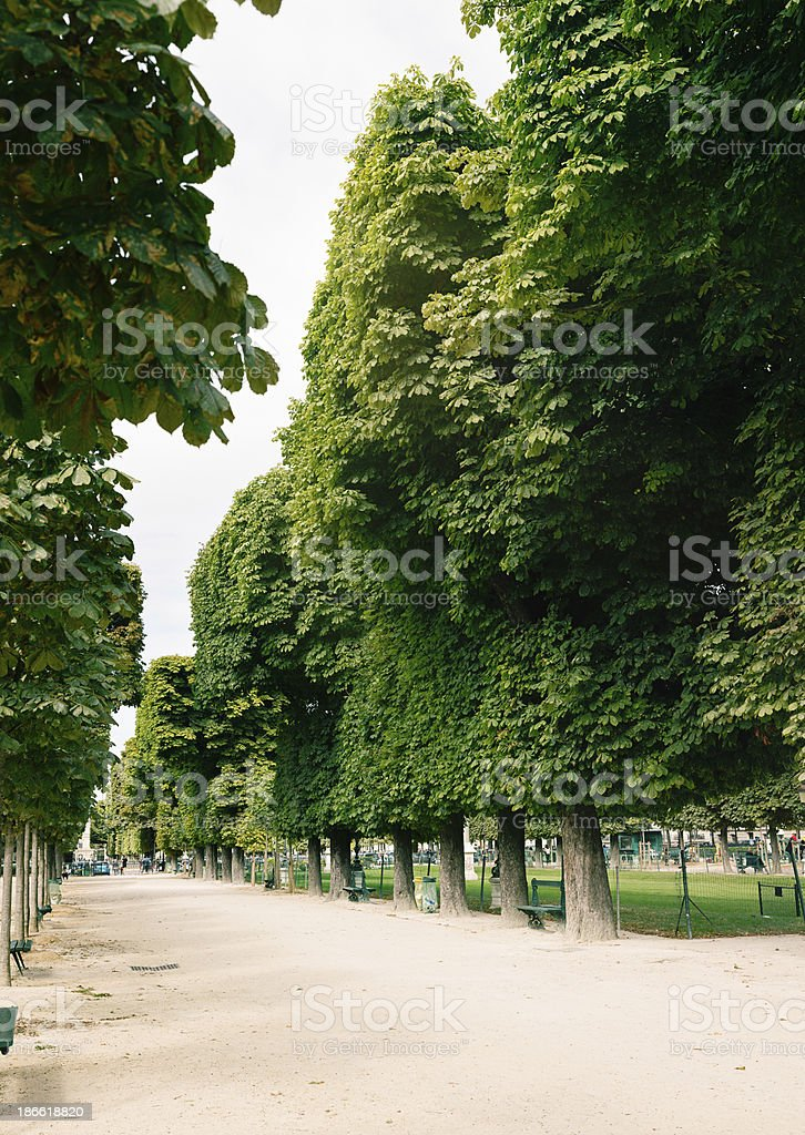 Paris jogging alley lined with plane trees royalty-free stock photo