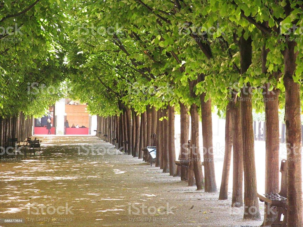 Paris Palais Royal Garden Trees stock photo