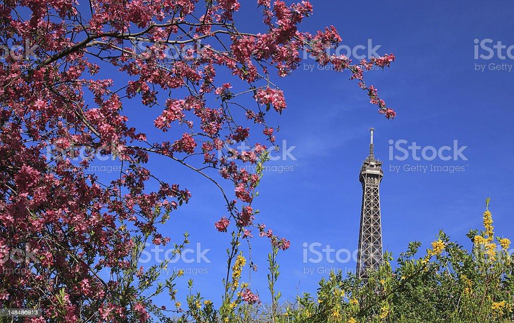Parisian Spring stock photo