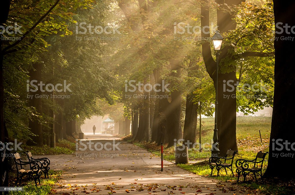 Park alley in the fog illuminated by the sun stock photo