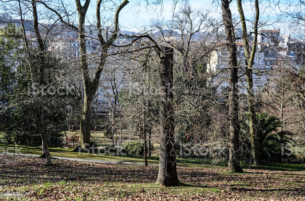 Park and city stock photo