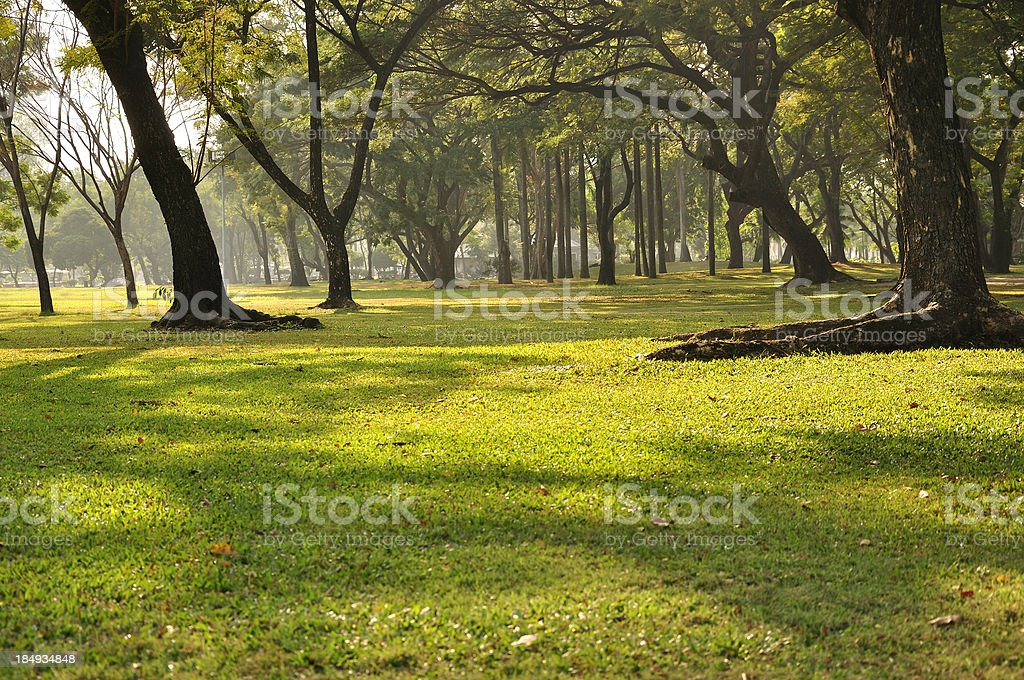 Park and trees stock photo