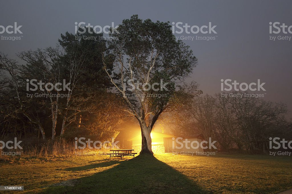 Park at Night royalty-free stock photo