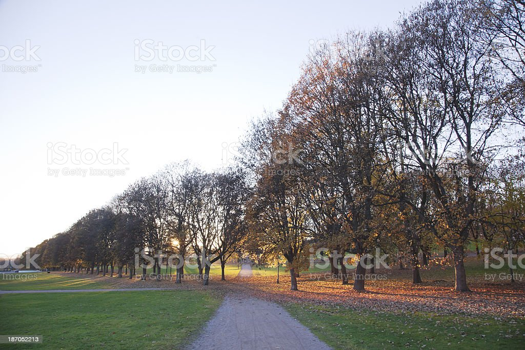 Park at sunset  in fall. royalty-free stock photo