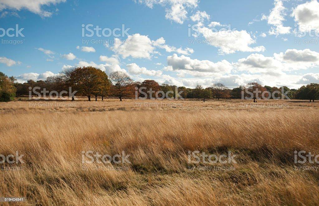 Park autumn day blue sky wide angle stock photo