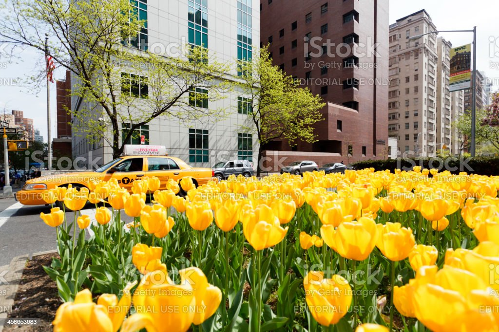 Park Avenue Springtime New York City stock photo