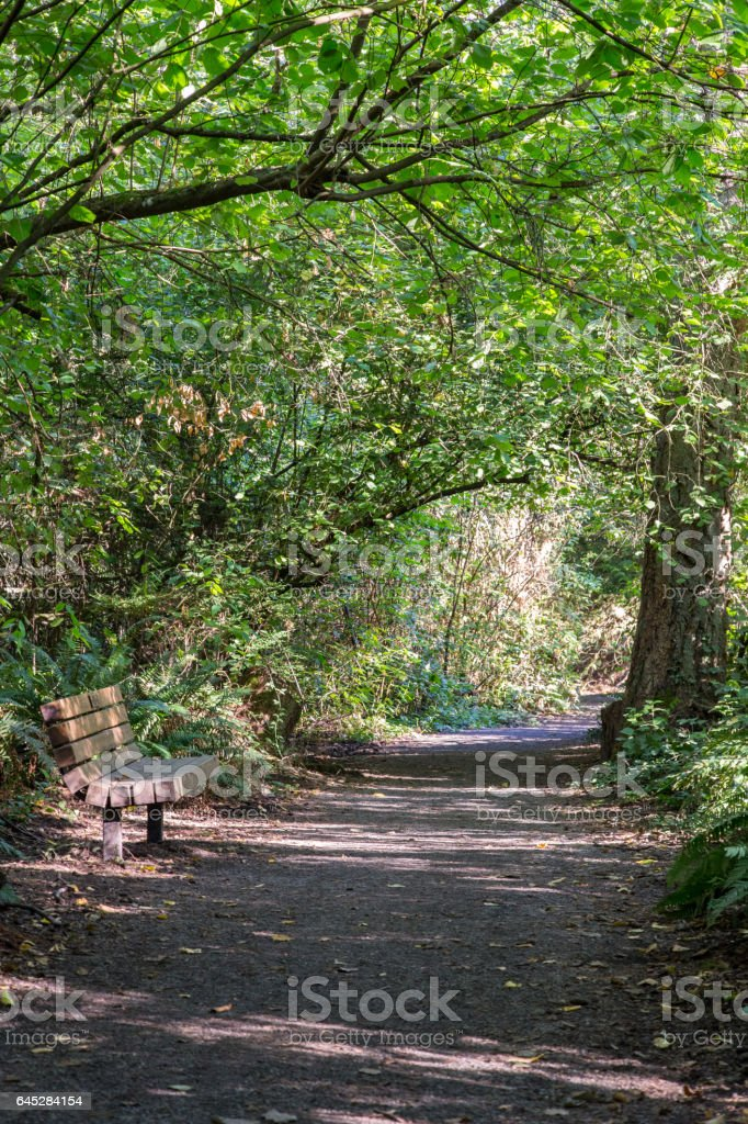 Park bench along a foot trail stock photo