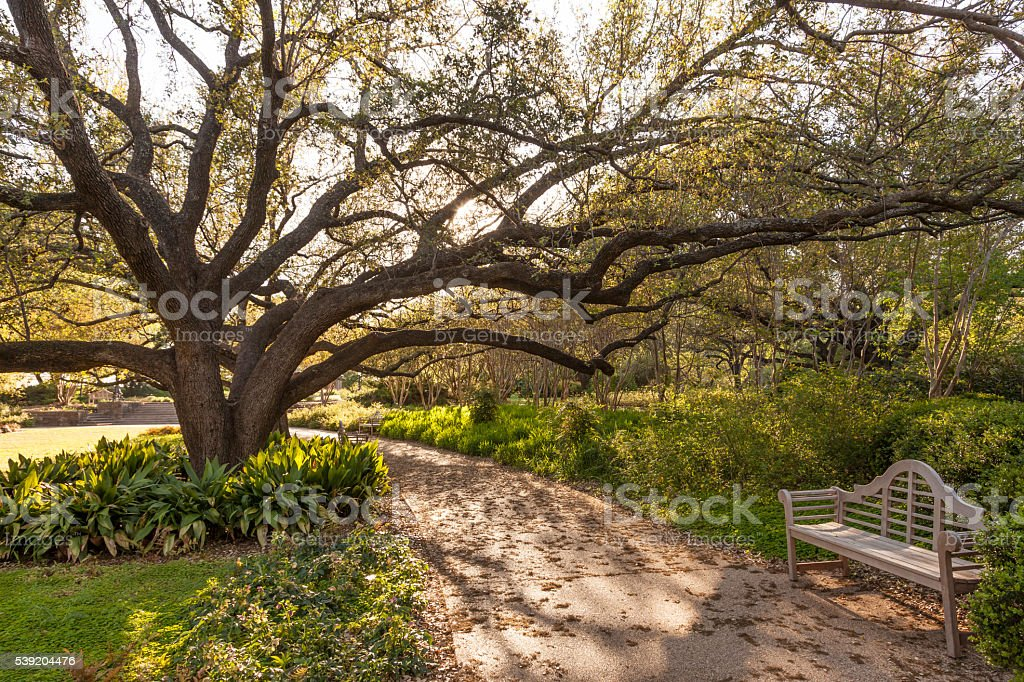 Park bench and tree in the city park stock photo