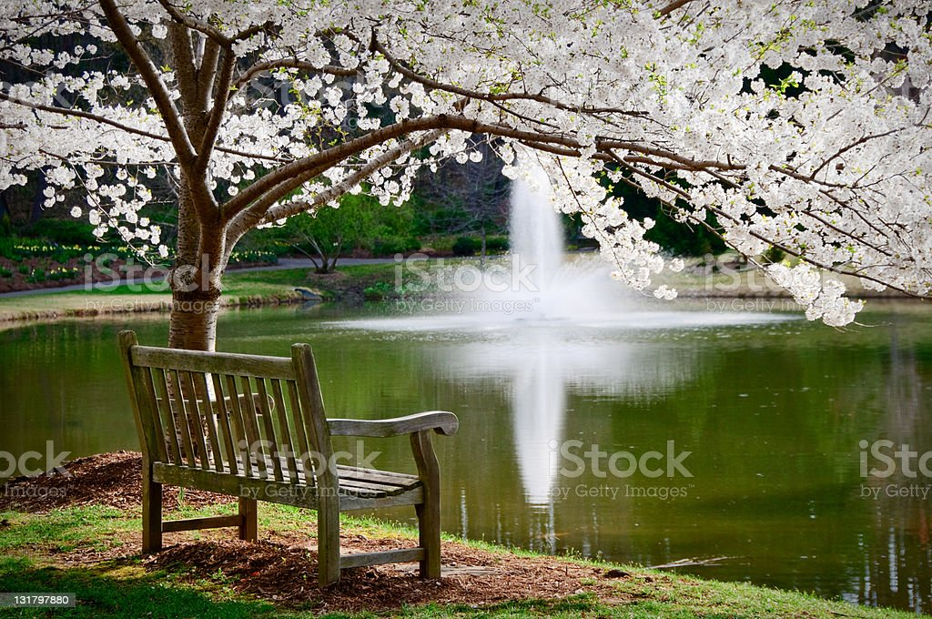 Park bench in tranquil scene stock photo