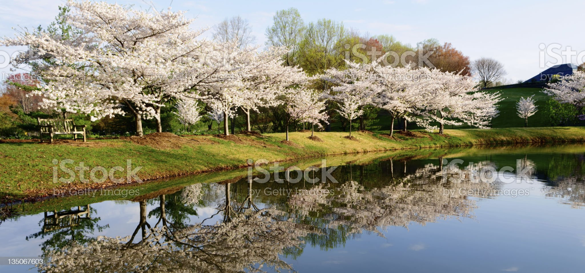 XXXL: Park bench overlooking pond royalty-free stock photo