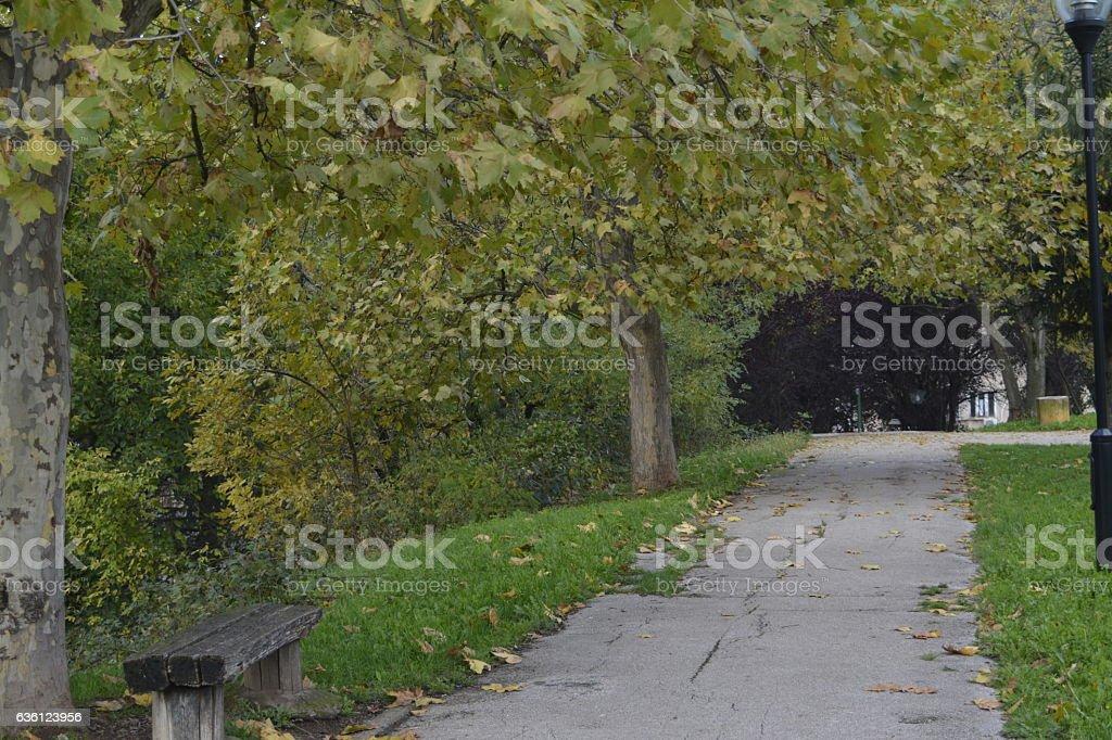 park, bench stock photo