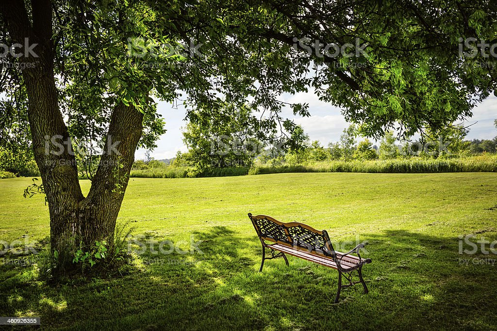 Park bench sitting under a tree stock photo