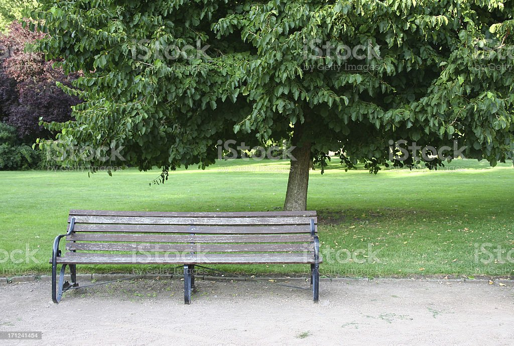 park bench under a large tree royalty-free stock photo