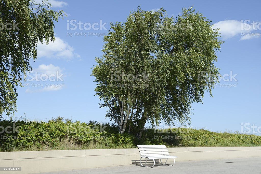 park bench under birch tree royalty-free stock photo
