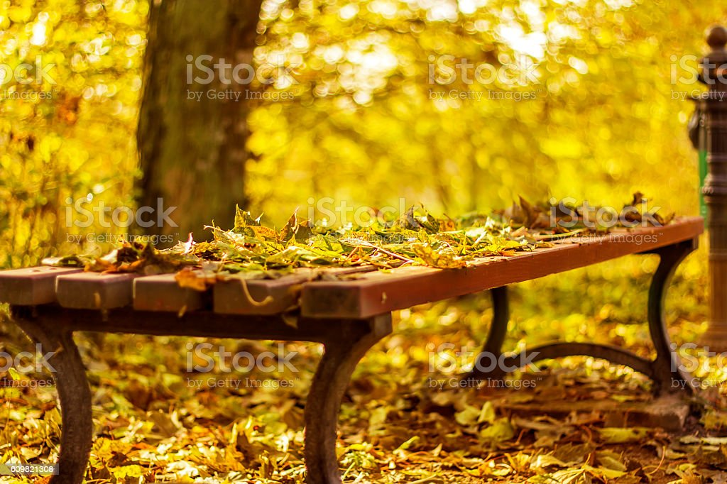 Park bench with autumn yellow leaves. stock photo