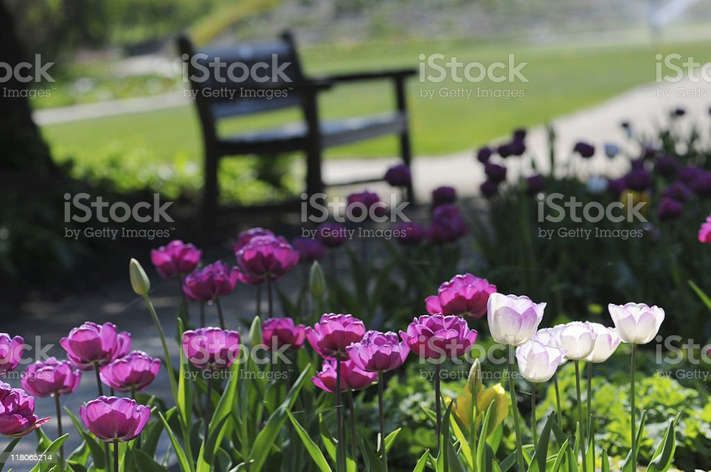 Park bench with Tulips royalty-free stock photo
