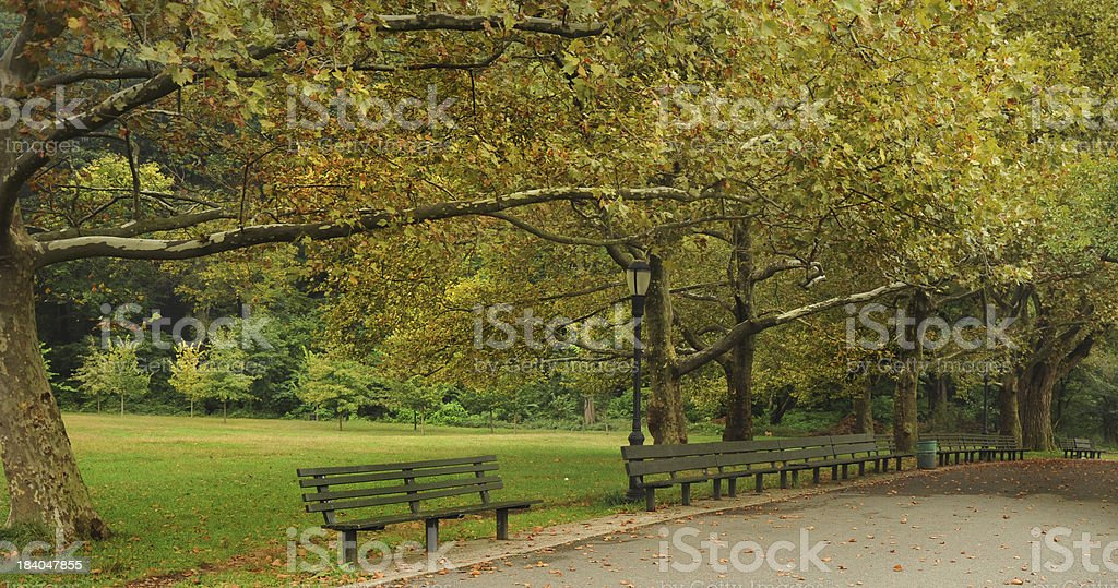 Park Benches and Trees in New York City royalty-free stock photo