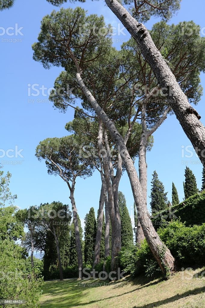 Park between Abbazia San Miniato Church San Salvatore, Florence  Italy stock photo