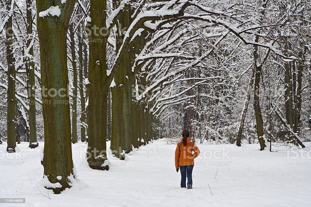 Park during winter royalty-free stock photo