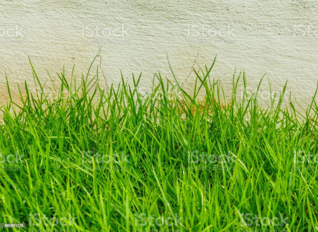 Park grassy stock photo