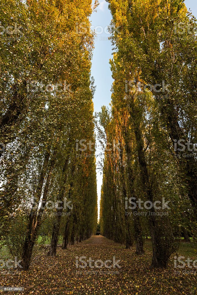 Park in autumn (Correggio) stock photo